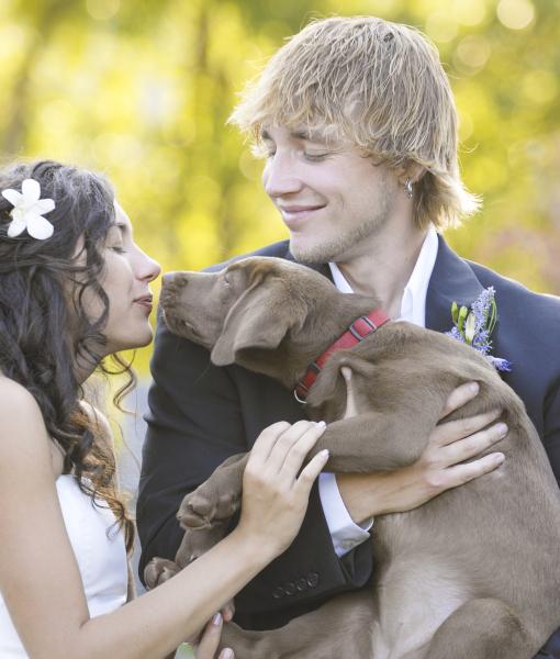 cachorros-casamentos-04