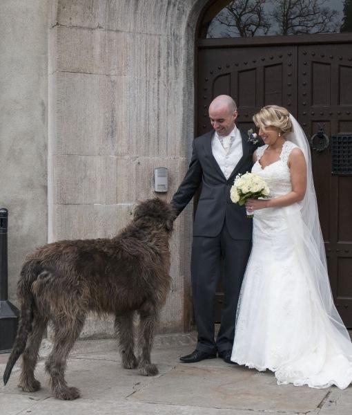 cachorros-casamentos-09