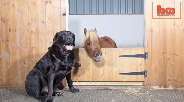 O cavalo Acer e o cachorro Demon são grandes amigos. (Foto: Reprodução / Bark Post)