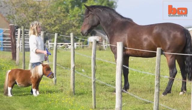 Olhe o tamanho de Acer perto de outro cavalo. (Foto: Reprodução / Bark Post)