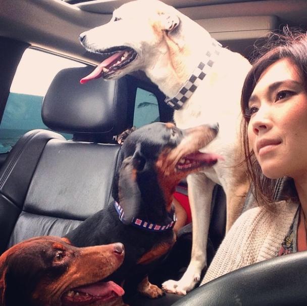 Daniele Suzuki com seus três cães. (Foto: Reprodução / Instagram)