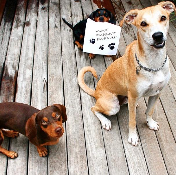Pimenta (no canto esquerdo), Margarida (ao fundo) e Tatuí (no canto direito). (Foto: Reprodução / Instagram)
