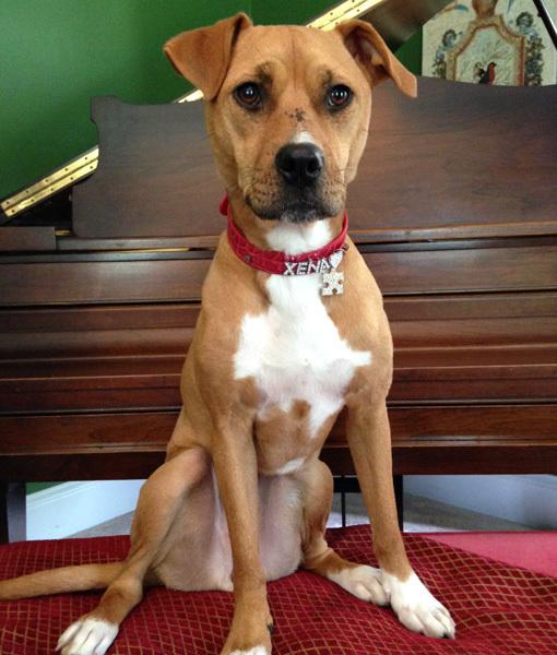 Xena foi adotada em março de 2013 e se tornou uma grande heroína para um garoto autista de 8 anos, que teve uma grande melhora com a presença da cachorra. (Foto: Reprodução / Pawnation)