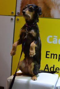 A Estopinha também participou da 13ª Pet South America. (Foto: Karina Sakita)