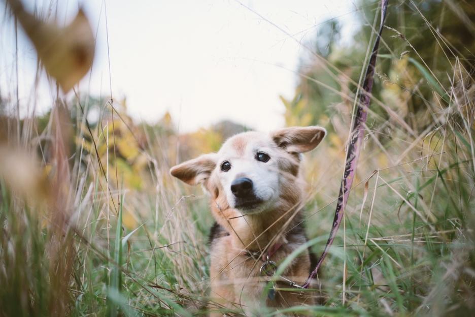 A cachorra foi homenageada com um lindo ensaio fotográfico. (Foto: Reprodução / Blog Maria Sharp)