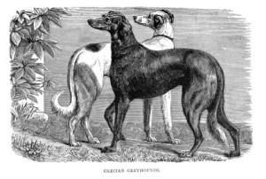 Greyhound antigo. (Foto: Reprodução / The I Love Dogs Site)