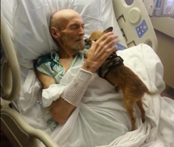 James Wathern pediu para reencontrar seu chihuahua Bubba no hospital. (Foto: Reprodução / Facebook / Knox-Whitley Animal Shelter