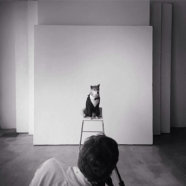 O shiba inu no estúdio, durante campanha para uma grife. (Foto: Reprodução / Instagram)
