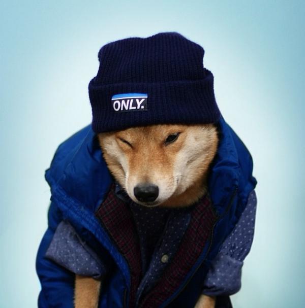 Bodhi consegue até mesmo fingir que está com frio. (Foto: Reprodução / Instagram)