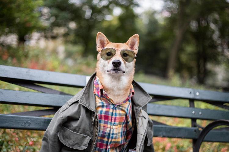 O cão Bodhi ganha muito dinheiro trabalhando como modelo. (Foto: Reprodução / Fast Company)