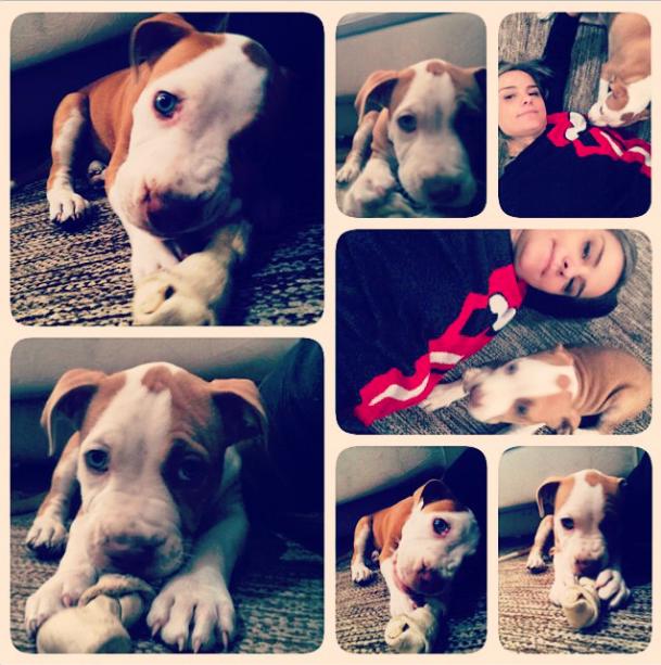 O cachorrinho Doc. (Foto: Reprodução / Instagram)