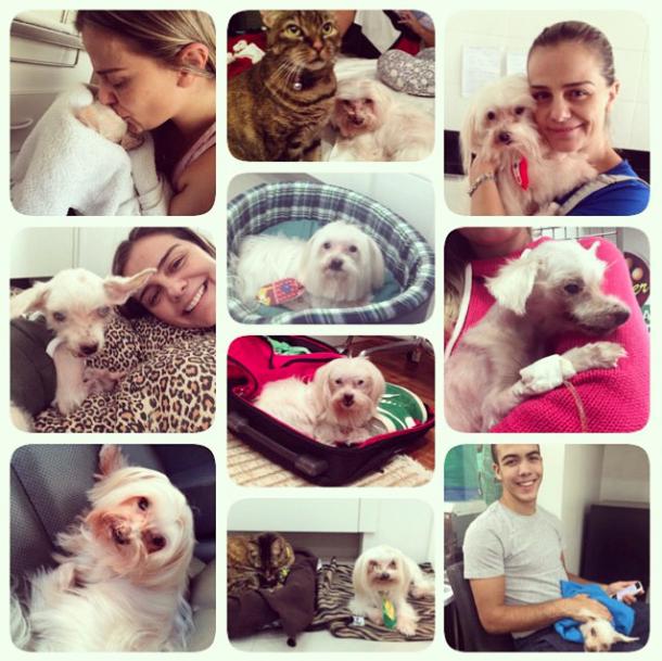 Milene Domingues fez uma montagem para homenagear seu cachorro Mike. Seu filho Ronald e sua gata Kitty também aparecem ao lado do cão. (Foto: Reprodução / Instagram)