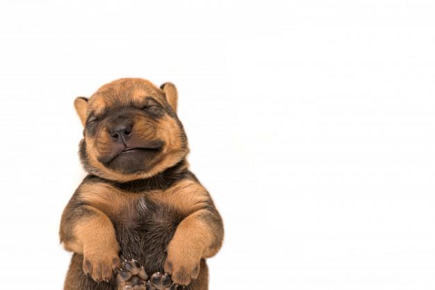 expressões que envolvem cachorro