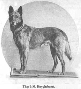 Pastor Belga Malinois antigamente (Foto: Reprodução / The I Love Dogs Site)