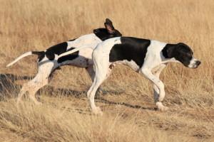 Pointer atual (Foto: Reprodução / The I Love Dogs Site)