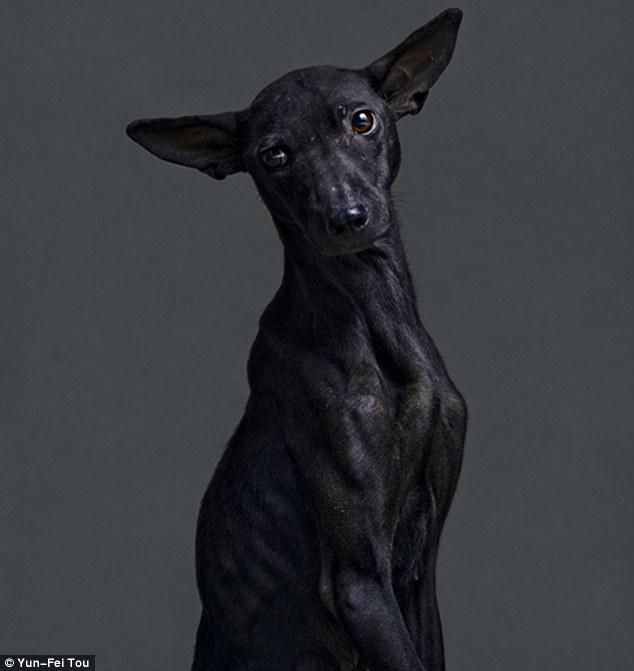 O fotógrafo Yun-Fei Tou teve como objetivo valorizar a vida dos cães. (Foto: Reprodução / Daily Mail UK)