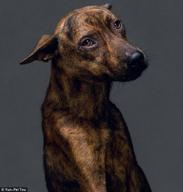 Cachorros foram fotografados pouco tempo antes de serem sacrificados. (Foto: Reprodução / Daily Mail UK)