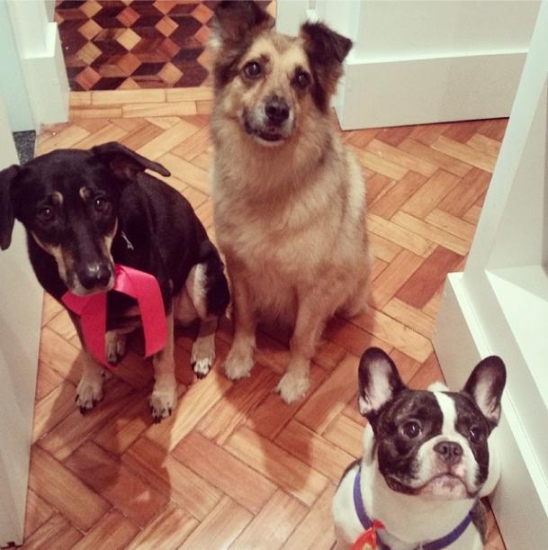 Frida (do lado esquerdo), Fidel (no meio) e Cara de Fuinha (no canto direito). (Foto: Reprodução / Instagram)