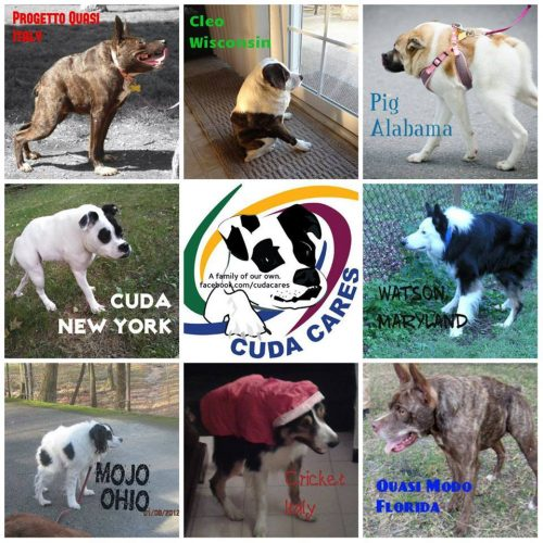 Cães com Síndrome da Espinha Curta. Foto: Reprodução