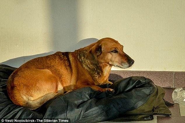 Masha espera seu tutor na porta do hospital. (Foto: Reprodução / Daily Mail UK)