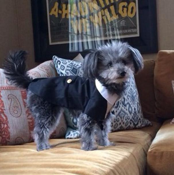 A cachorra Gina de Jason Biggs fugiu de casa. (Foto: Reprodução / Instagram / biggsjason)