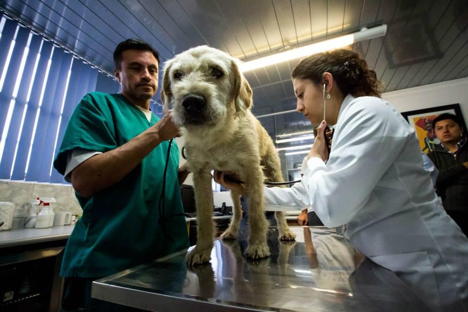 Arthur em um hospital veterinário na cidade de Quito. (Foto: Reprodução / Facebook / Team Peak Performance)