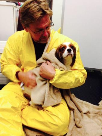 O cão recebendo carinho do Dr. Bisset. (Foto: Reprodução / Twitter / Sana Syed)