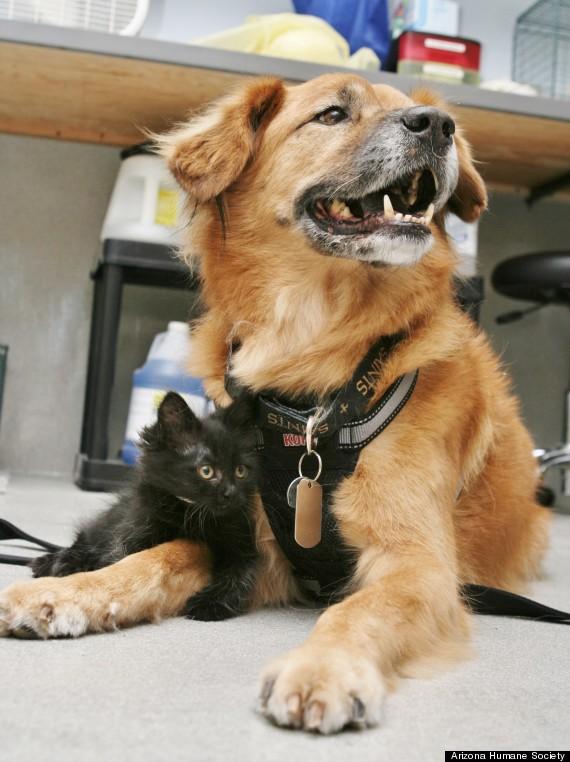 O cachorro Boots com gatinha. (Foto: Reprodução / Huffington Post)