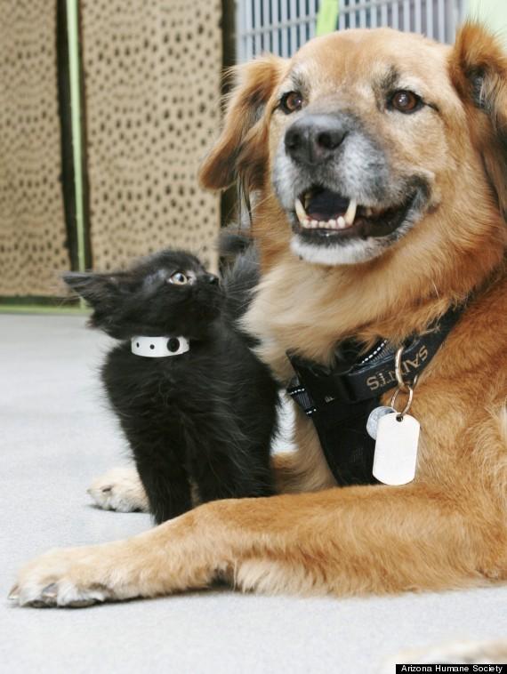 O cachorro é babá de gatinhos.  (Foto: Reprodução / Huffington Post)