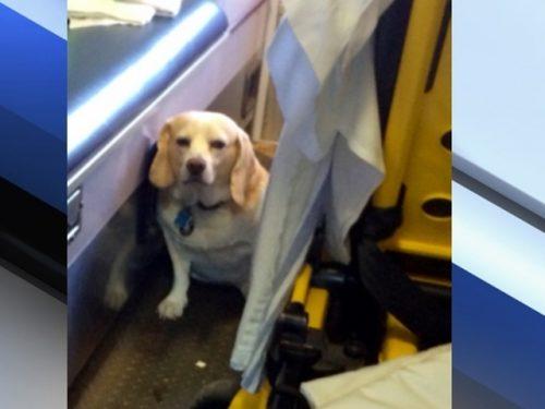 Buddy na ambulância. Foto: Reprodução