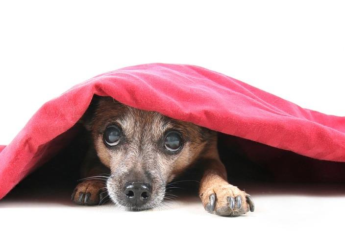 Cachorro chateado. Foto: Reprodução / 3milliondogs