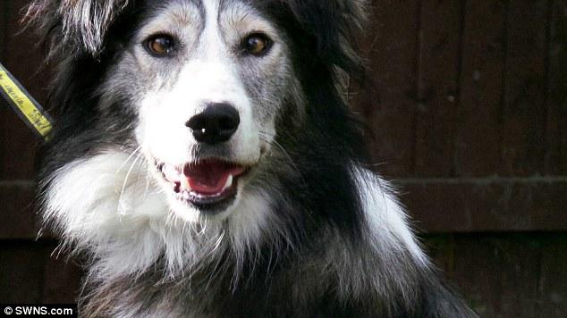 O cão Dennis nasceu com estrabismo. (Foto: Reprodução / Daily Mail UK)