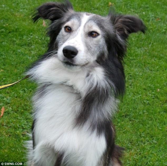 O cão Dennis procura um novo lar. (Foto: Reprodução / Daily Mail UK)