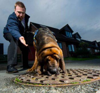 O cão Hector vai usar o faro para detectar gordura no esgoto. (Foto: Reprodução / Metro UK)