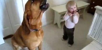 cachorro-garotinho-cantando