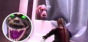 cachorro-godzilla-video