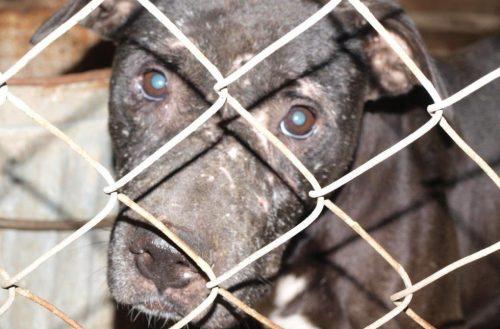 69 cães conseguiram a liberdade. (Foto: Reprodução / Huffington Post)