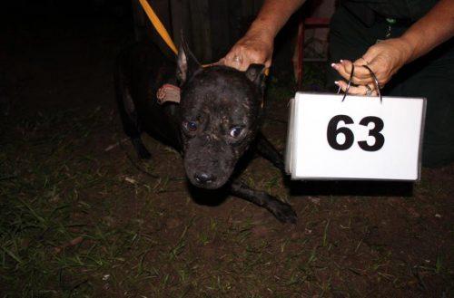 Esses cachorros enfrentaram a crueldade de alguns humanos. (Foto: Reprodução / Huffington Post)