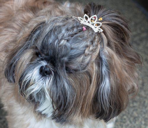 cachorros-com-trancas (1)