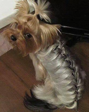 cachorros-com-trancas (4)