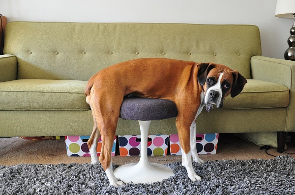 cachorros-mobilia-01