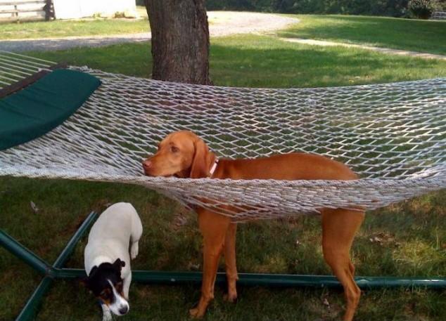 cachorros-mobilia-07