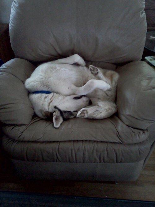 cachorros-mobilia-11