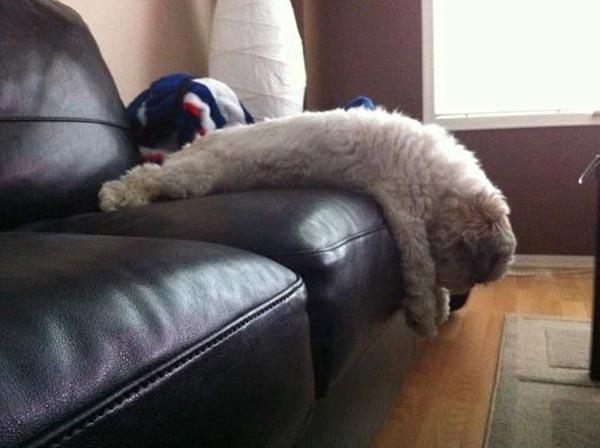cachorros-mobilia-16