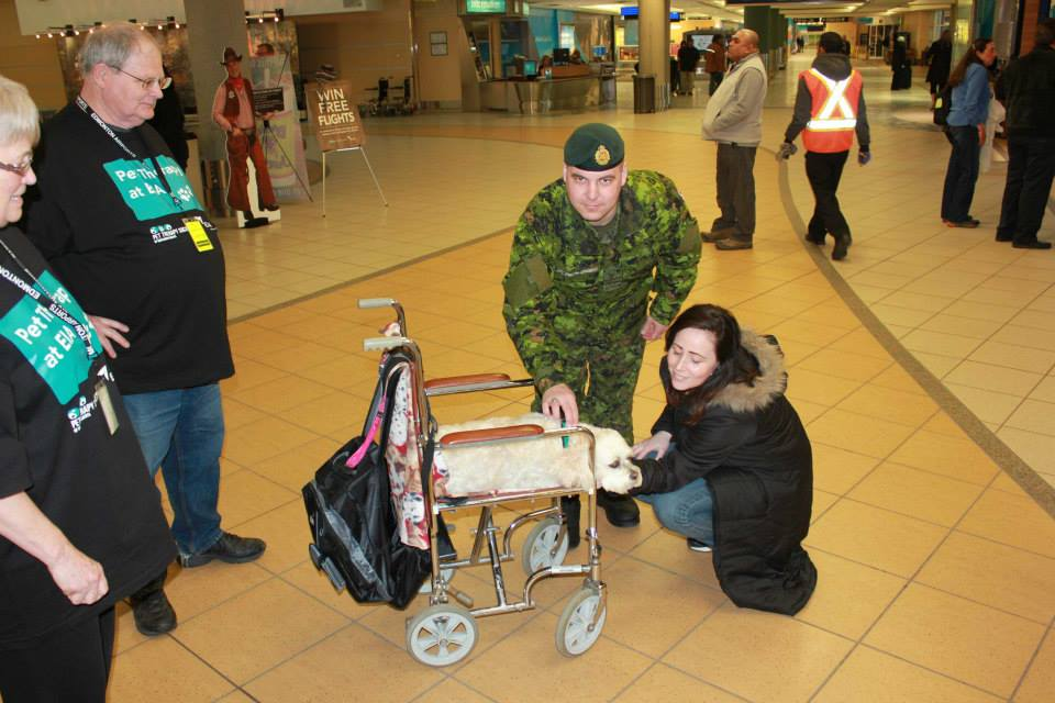 Os cães distraem os passageiros. (Foto: Reprodução / Facebook / Edmonton Internacional Airport)