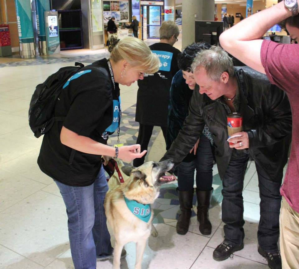 Cachorros terapeutas deixam passageiros mais calmos. (Foto: Reprodução / Facebook / Edmonton Internacional Airport)