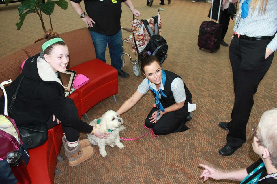 Pets terapeutas são um sucesso. (Foto: Reprodução / Facebook / Edmonton Internacional Airport)