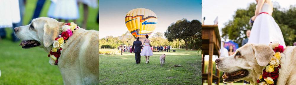 Casamento Júlia e Rogério. Foto: Divulgação