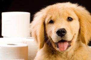 Diarréia em cães. Foto: Reprodução