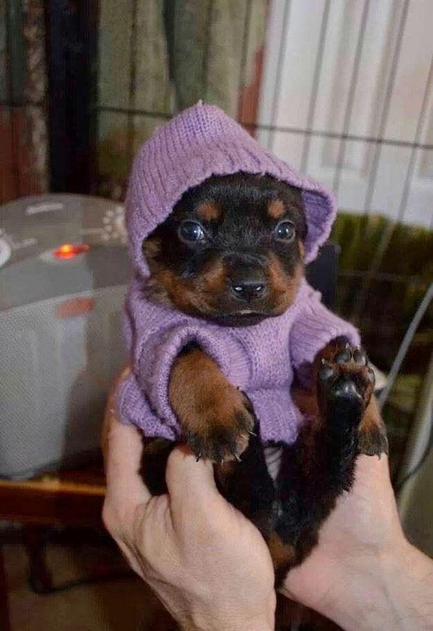 Filhotinho Roupinha Fofura Extrema Portal Do Dog